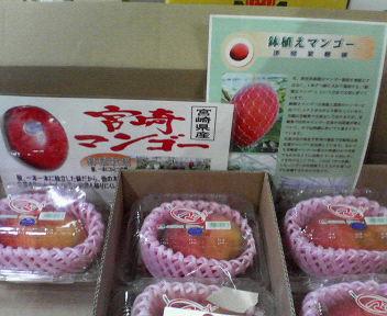 宮崎のマンゴー