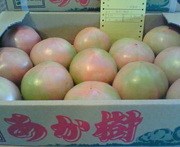 余市産トマト・あか樹