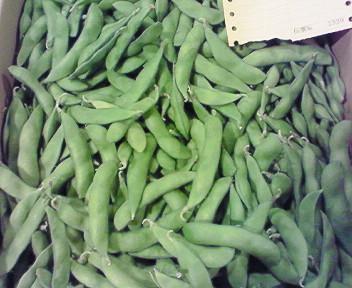 函館七飯産枝豆