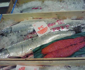 広尾産秋鮭
