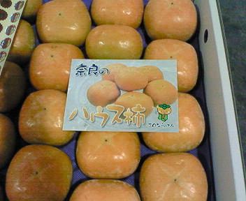 奈良産ハウス柿