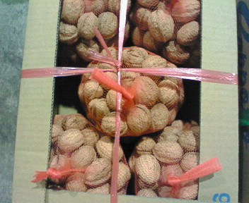 札幌産殻付き胡桃