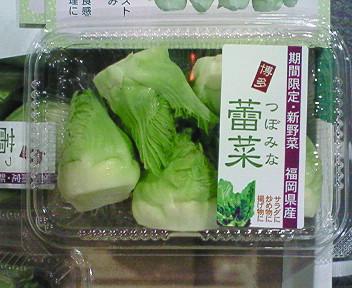福岡博多産蕾菜(つぼみな)