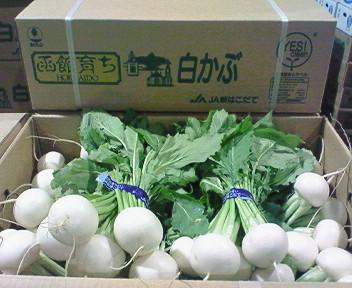函館七飯産白かぶ