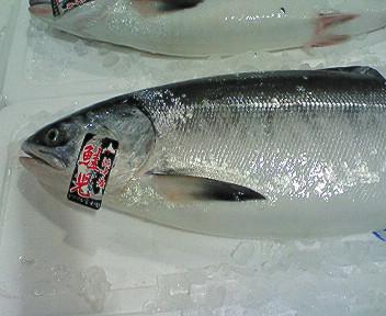 厚岸浜中産鮭児(ケイジ)