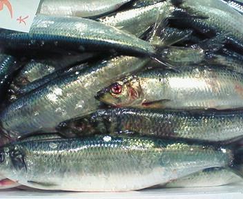 春告魚・日本海側ニシン