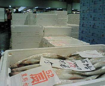 日本海側ニシン大漁