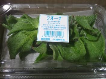 静岡産アイスプラント・シオーナ