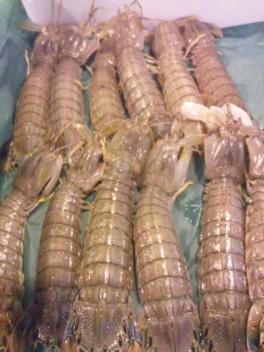 石狩産蝦蛄・しゃこ