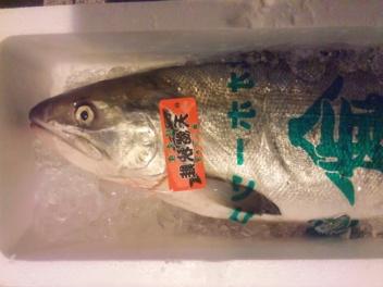 オホーツク産秋鮭