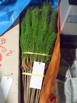 松飾りの松