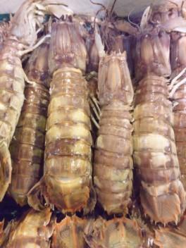 石狩産蝦蛄