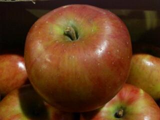 七飯産りんご、サンつがる
