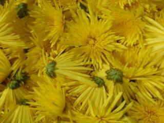 札幌産食用菊