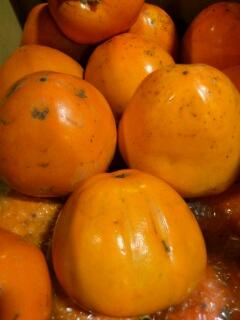 愛媛産富士柿