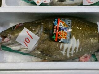 歯舞産雄鱈