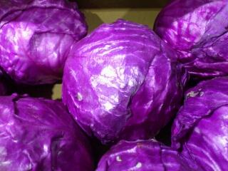 札幌産紫キャベツ